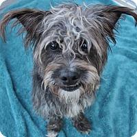 Adopt A Pet :: Felix - Atlanta, GA