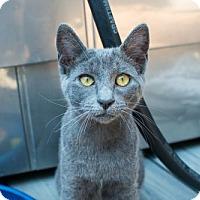 Adopt A Pet :: LIZZIE - El Segundo, CA