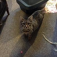 Adopt A Pet :: Olivia - Sedalia, MO