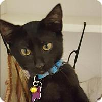 Adopt A Pet :: Jett - Neosho, MO