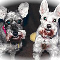 Adopt A Pet :: Layla & LuLu - Sharonville, OH