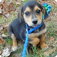 Adopt A Pet :: Margo - Allentown, NJ