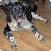 Adopt A Pet :: Mindy - Golden Valley, AZ