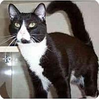 Adopt A Pet :: Gem - Secaucus, NJ