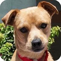 Adopt A Pet :: Bud - Gilbert, AZ