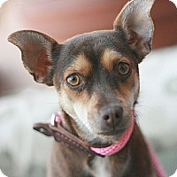 Adopt A Pet :: Lilly - Canoga Park, CA