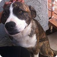 Adopt A Pet :: Princess - Newbury Park, CA