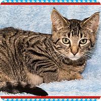 Adopt A Pet :: Pauly - Mt. Prospect, IL