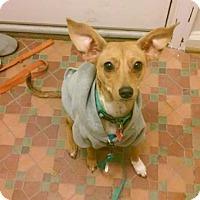 Adopt A Pet :: Tina Fey - Garden City, MI