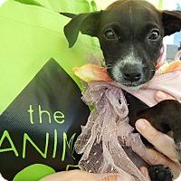 Adopt A Pet :: Michi - San Diego, CA