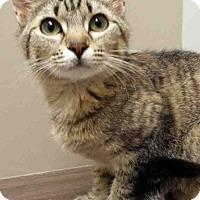 Adopt A Pet :: Isabella - Channahon, IL