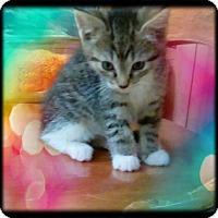 Adopt A Pet :: Felicity - Shippenville, PA
