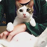 Adopt A Pet :: Dory - Gainesville, FL