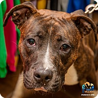Adopt A Pet :: Zale - Evansville, IN