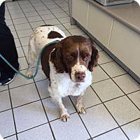 Adopt A Pet :: MI/Backes - Kent, OH