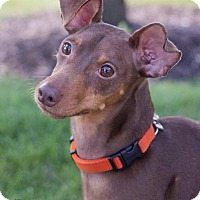 Adopt A Pet :: Franklin aka Frankie - Grand Rapids, MI
