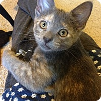 Adopt A Pet :: Emii - North Highlands, CA
