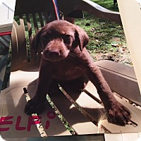 Adopt A Pet :: Elfi - Hohenwald, TN