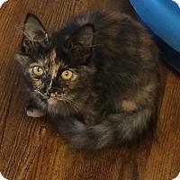 Adopt A Pet :: Sheena - Greensburg, PA