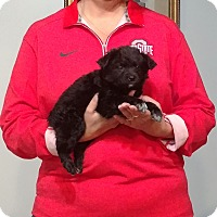 Adopt A Pet :: Carley - South Euclid, OH
