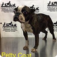 Adopt A Pet :: Petticoat - Waycross, GA