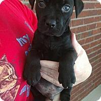 Adopt A Pet :: Willie - Pensacola, FL