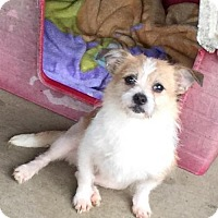 Adopt A Pet :: Jeanie - Lindale, TX
