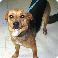 Adopt A Pet :: Rascal - Eastpoint, FL
