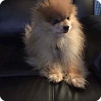 Adopt A Pet :: Sonny - Newport, KY