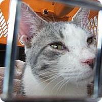 Adopt A Pet :: Yoda - Seaford, DE