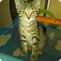 Adopt A Pet :: Skye (bottle baby) - Sterling Hgts, MI
