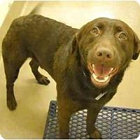 Adopt A Pet :: Revis - Cumming, GA