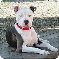 Adopt A Pet :: Jasmine - Santa Barbara, CA