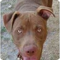 Adopt A Pet :: Oscar - Gilbert, AZ
