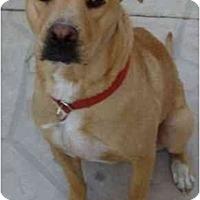 Adopt A Pet :: Ruby - Gilbert, AZ