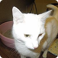 Adopt A Pet :: Casper - Medina, OH