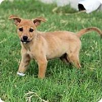 Adopt A Pet :: Thelma - Austin, TX