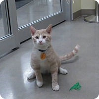 Adopt A Pet :: Toby - Edmond, OK