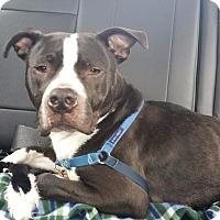 Adopt A Pet :: Frosty - Villa Park, IL