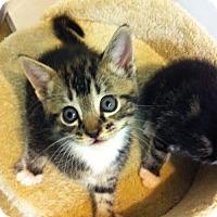 Adopt A Pet :: Gypsy - Watkinsville, GA
