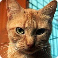 Adopt A Pet :: Melody - Palatine/Kildeer/Buffalo Grove, IL