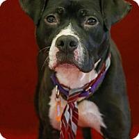 Adopt A Pet :: Ricardo - Flint, MI
