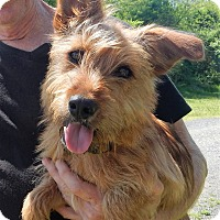 Adopt A Pet :: *Cassie - PENDING - Westport, CT