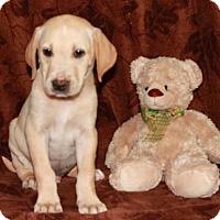 Adopt A Pet :: Edmund - Hagerstown, MD