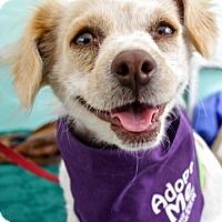 Adopt A Pet :: Hazel - Los Angeles, CA