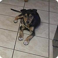 Adopt A Pet :: Kewpie - Salt Lake City, UT