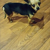 Adopt A Pet :: Sebastian - Breaux Bridge, LA