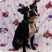 Adopt A Pet :: Dodge-092004j - Tupelo, MS