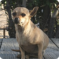 Adopt A Pet :: Boss - Phelan, CA