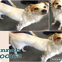 Adopt A Pet :: Hannah - San Antonio, TX